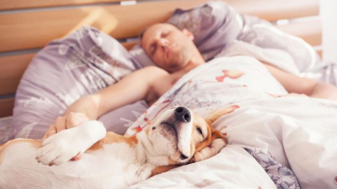 Schlaflose Nächte Playlist Partner Hund