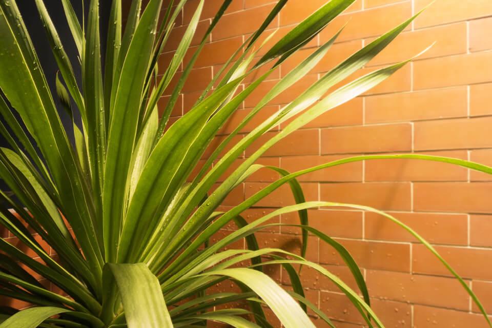 Richtig schönes Wohnen Palmwedel